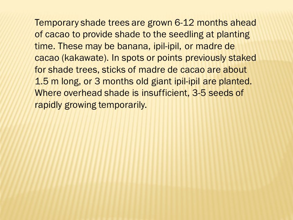 Temporary shade trees are grown 6-12 months ahead of cacao to provide shade to the seedling at planting time.