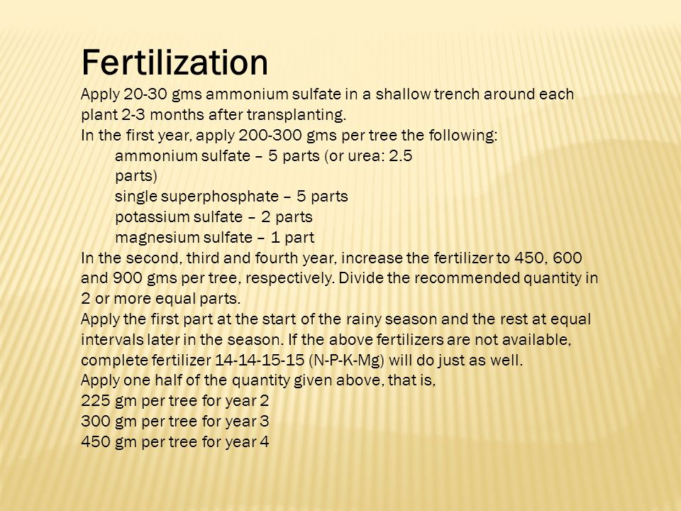 Fertilization Apply 20-30 gms ammonium sulfate in a shallow trench around each plant 2-3 months after transplanting.