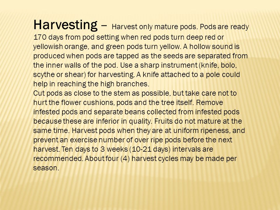 Harvesting – Harvest only mature pods
