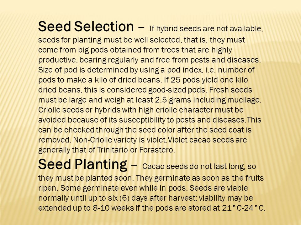 Seed Selection – If hybrid seeds are not available, seeds for planting must be well selected, that is, they must come from big pods obtained from trees that are highly productive, bearing regularly and free from pests and diseases. Size of pod is determined by using a pod index, i.e. number of pods to make a kilo of dried beans. If 25 pods yield one kilo dried beans, this is considered good-sized pods. Fresh seeds must be large and weigh at least 2.5 grams including mucilage.