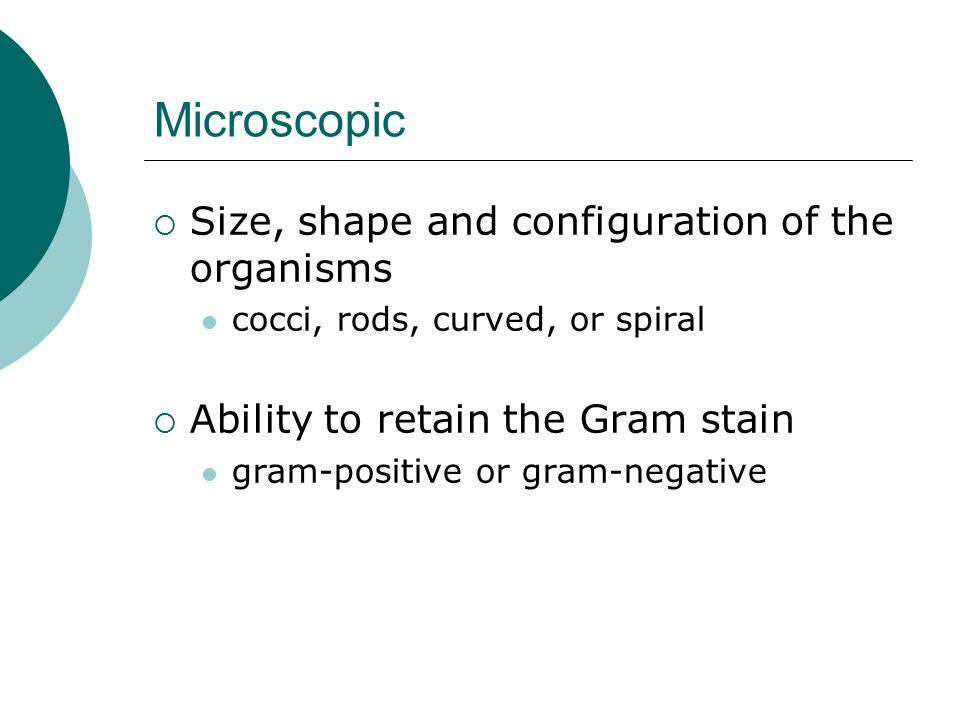 Microscopic Size, shape and configuration of the organisms