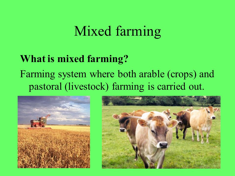 Mixed farming What is mixed farming