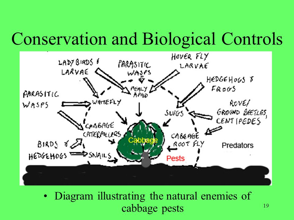 Conservation and Biological Controls