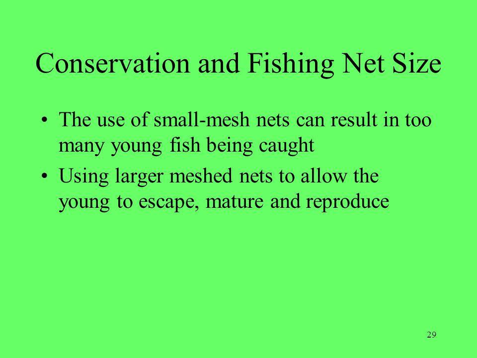 Conservation and Fishing Net Size