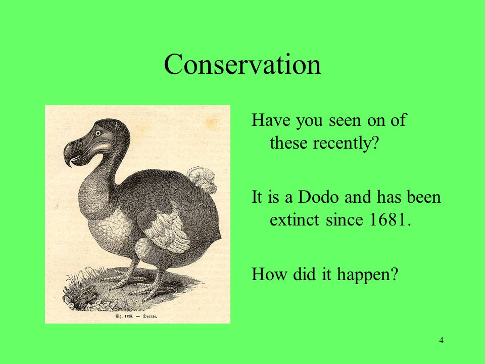 Conservation Have you seen on of these recently