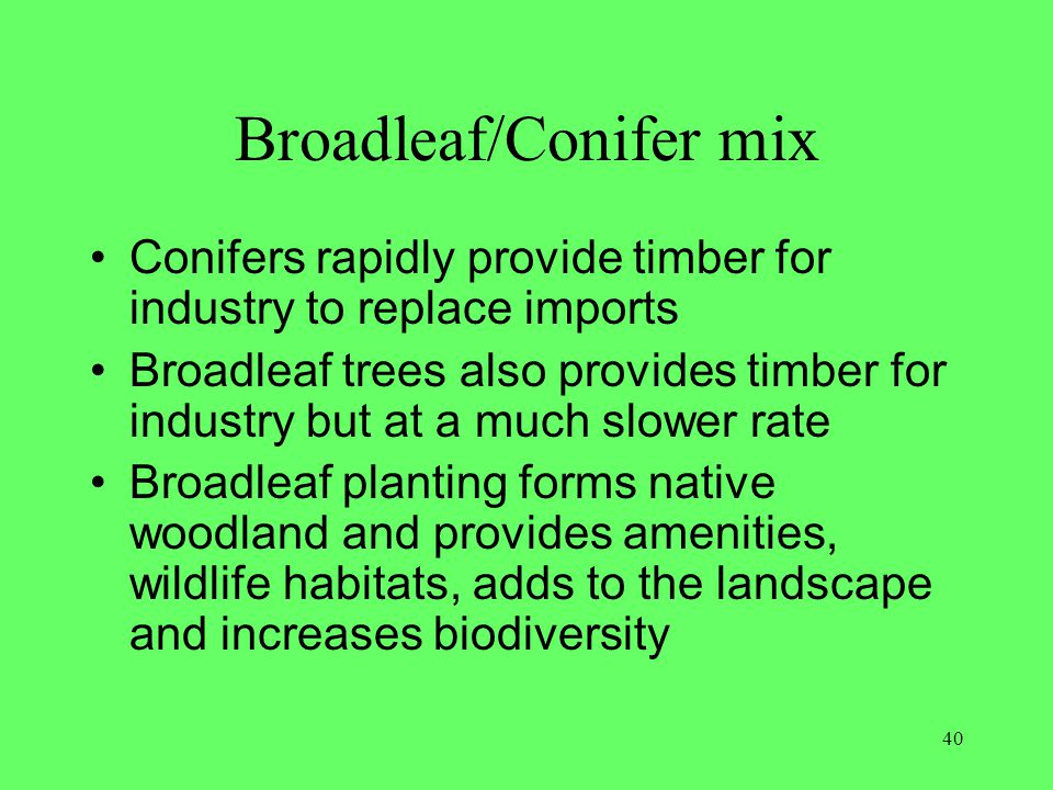 Broadleaf/Conifer mix