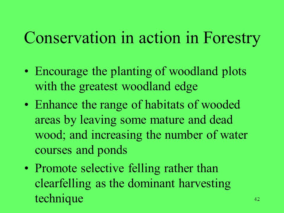 Conservation in action in Forestry