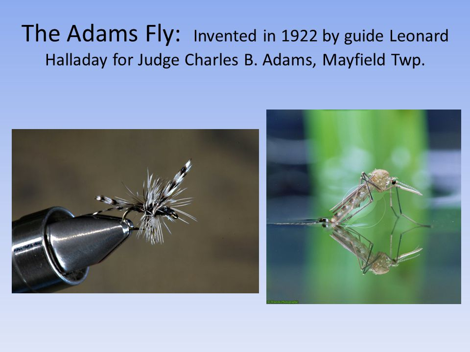 The Adams Fly: Invented in 1922 by guide Leonard Halladay for Judge Charles B. Adams, Mayfield Twp.