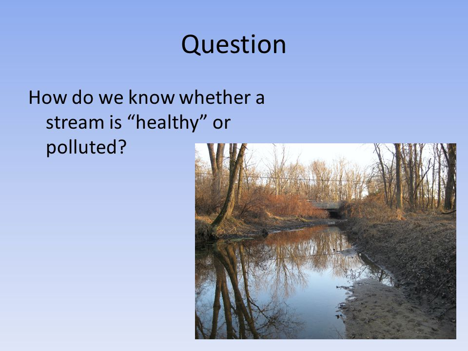 Question How do we know whether a stream is healthy or polluted