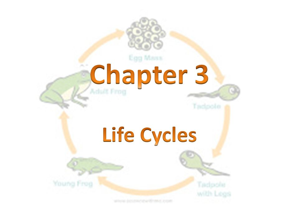 Chapter 3 Life Cycles