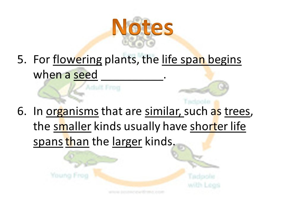 Notes For flowering plants, the life span begins when a seed __________.