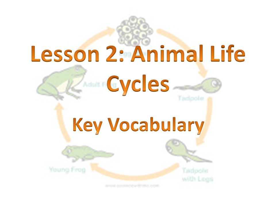 Lesson 2: Animal Life Cycles