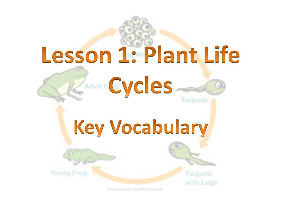 Lesson 1: Plant Life Cycles