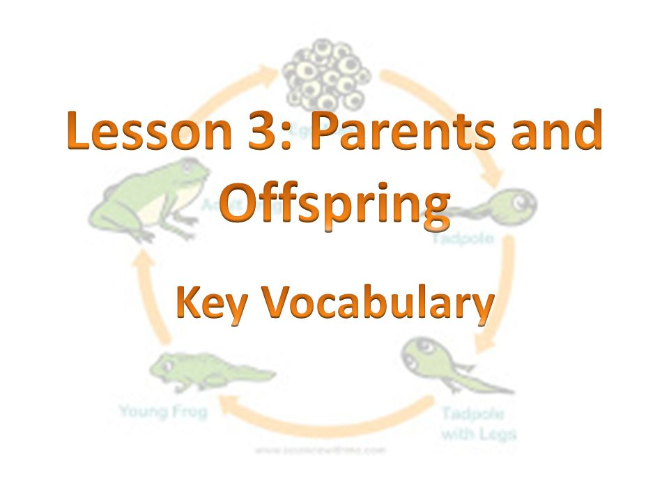 Lesson 3: Parents and Offspring