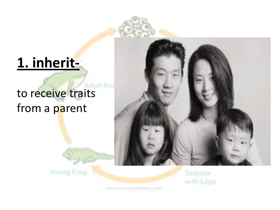 1. inherit- to receive traits from a parent