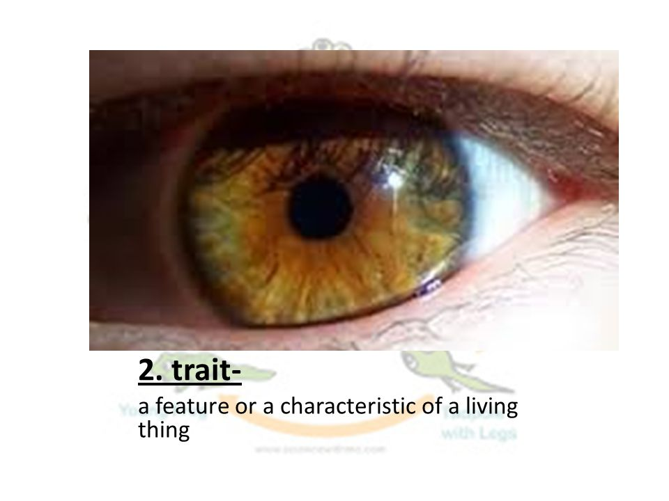 2. trait- a feature or a characteristic of a living thing
