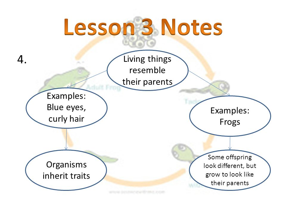 Lesson 3 Notes Living things resemble their parents
