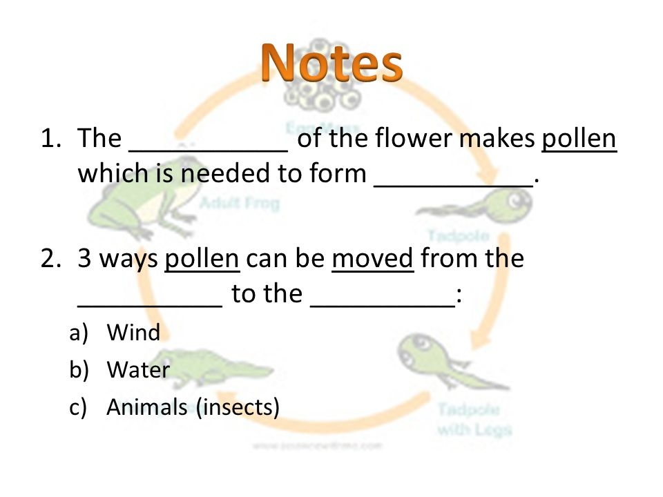 Notes The ___________ of the flower makes pollen which is needed to form ___________.