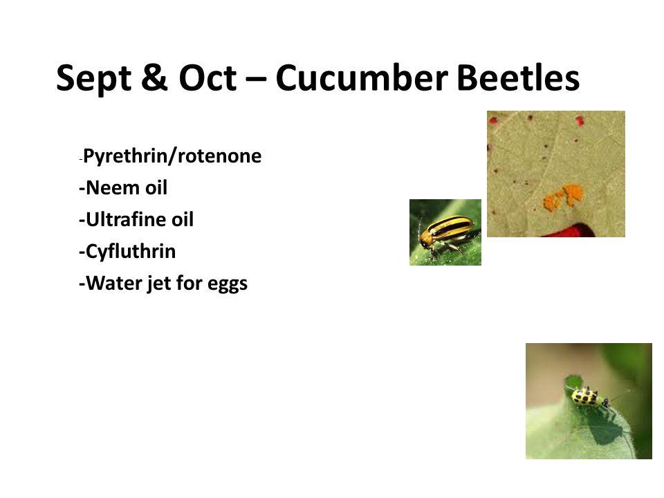 Sept & Oct – Cucumber Beetles