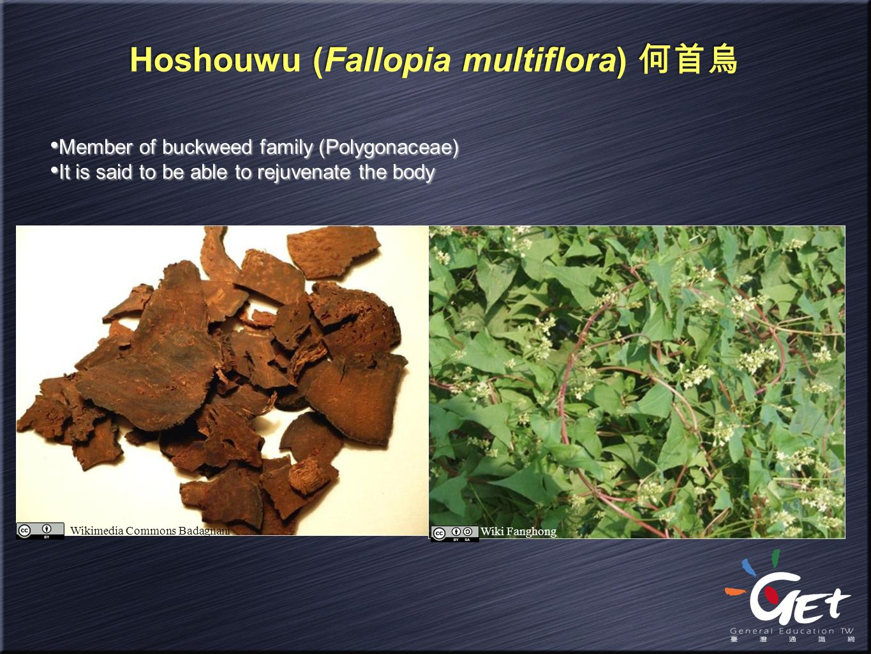 Hoshouwu (Fallopia multiflora) 何首烏