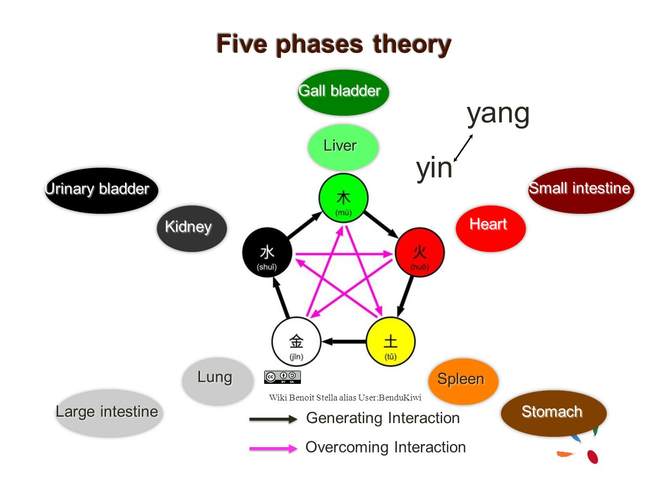 yang yin Five phases theory Gall bladder Liver Urinary bladder