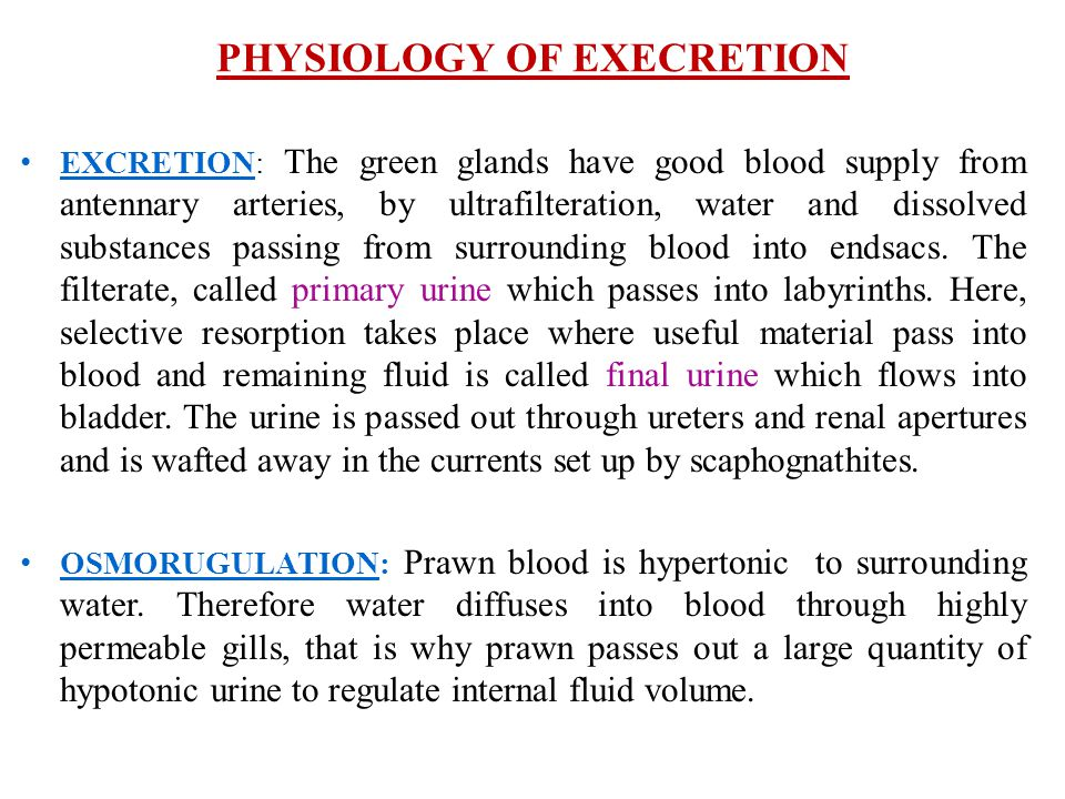 PHYSIOLOGY OF EXECRETION
