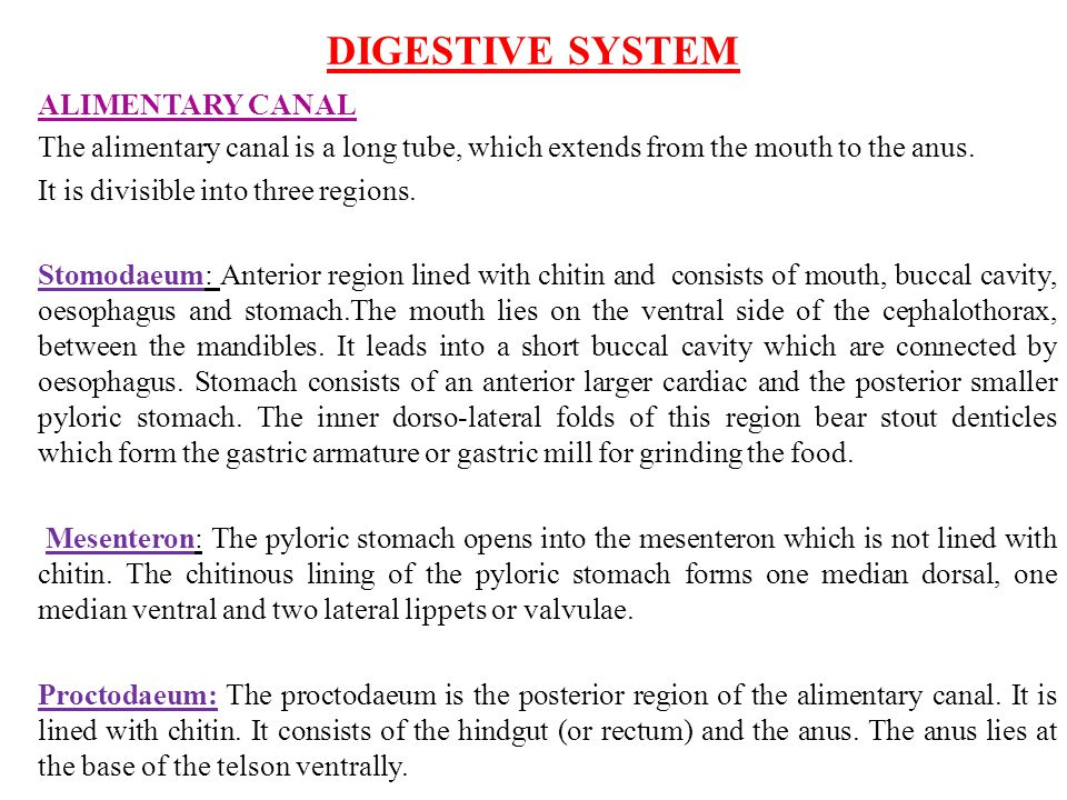 DIGESTIVE SYSTEM ALIMENTARY CANAL