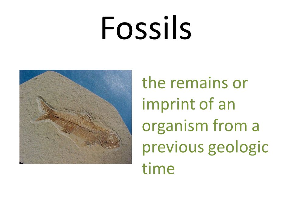 Fossils the remains or imprint of an organism from a previous geologic time