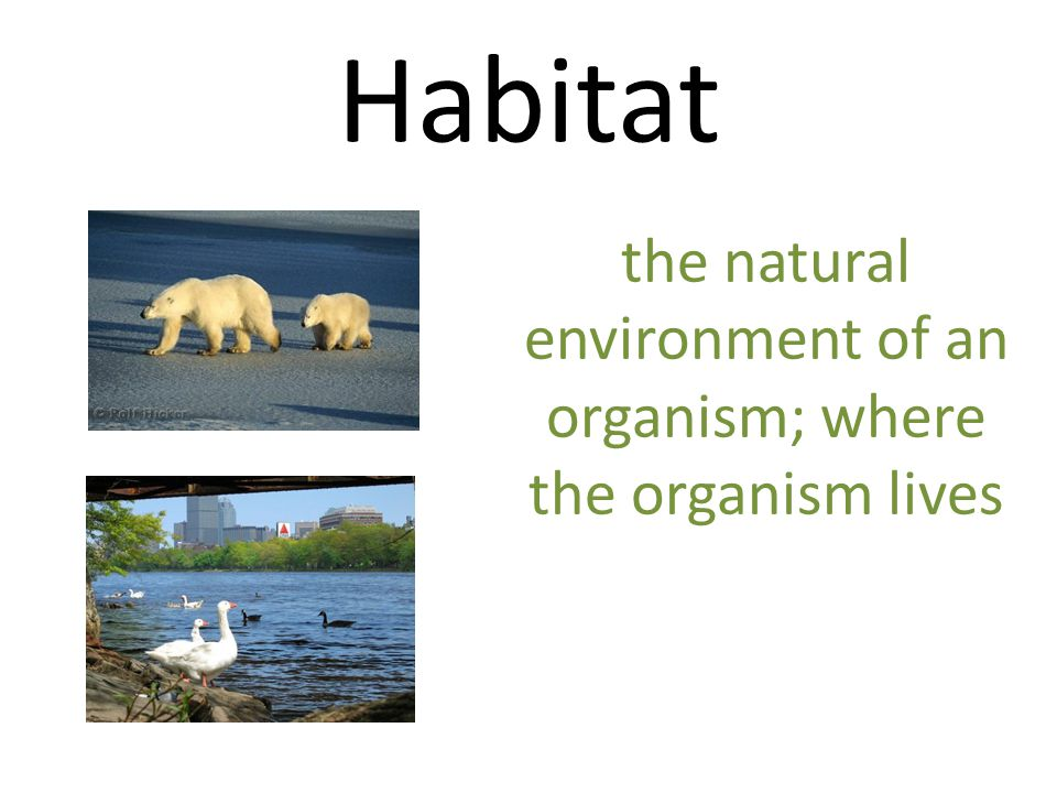 the natural environment of an organism; where the organism lives