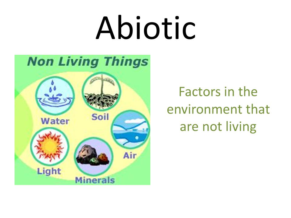 Factors in the environment that are not living