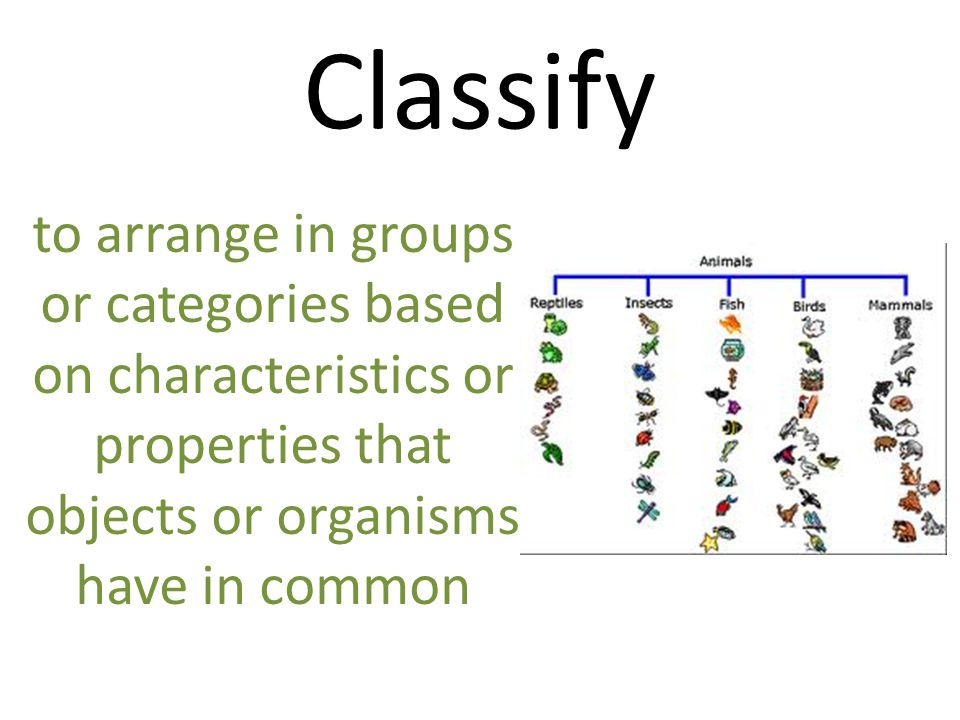 Classify to arrange in groups or categories based