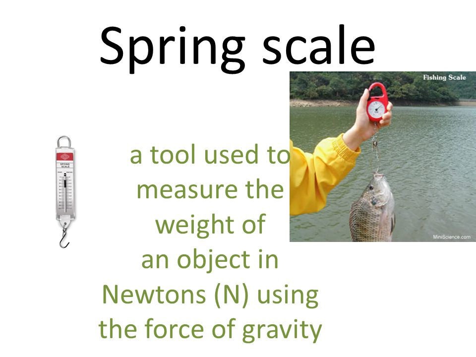 Spring scale a tool used to measure the weight of