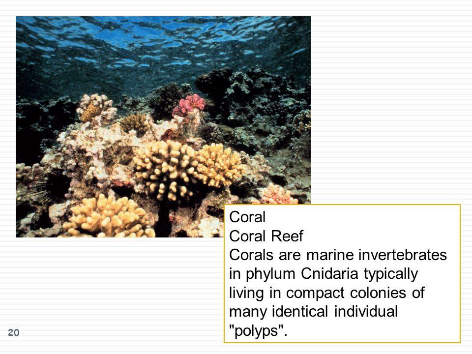 Coral Coral Reef.