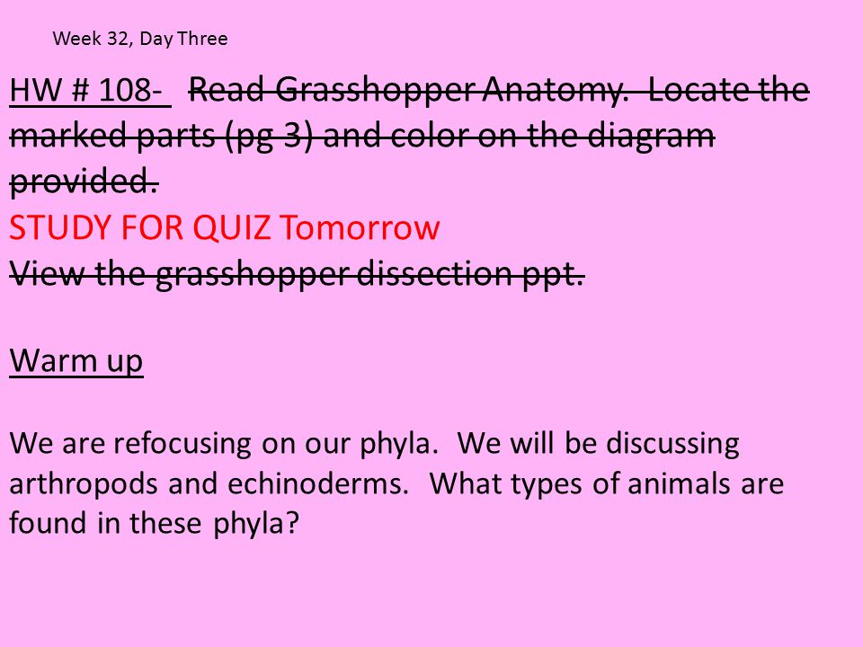 STUDY FOR QUIZ Tomorrow View the grasshopper dissection ppt.