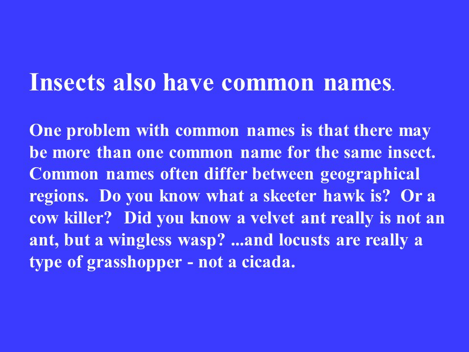 Insects also have common names.