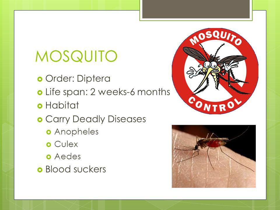 MOSQUITO Order: Diptera Life span: 2 weeks-6 months Habitat