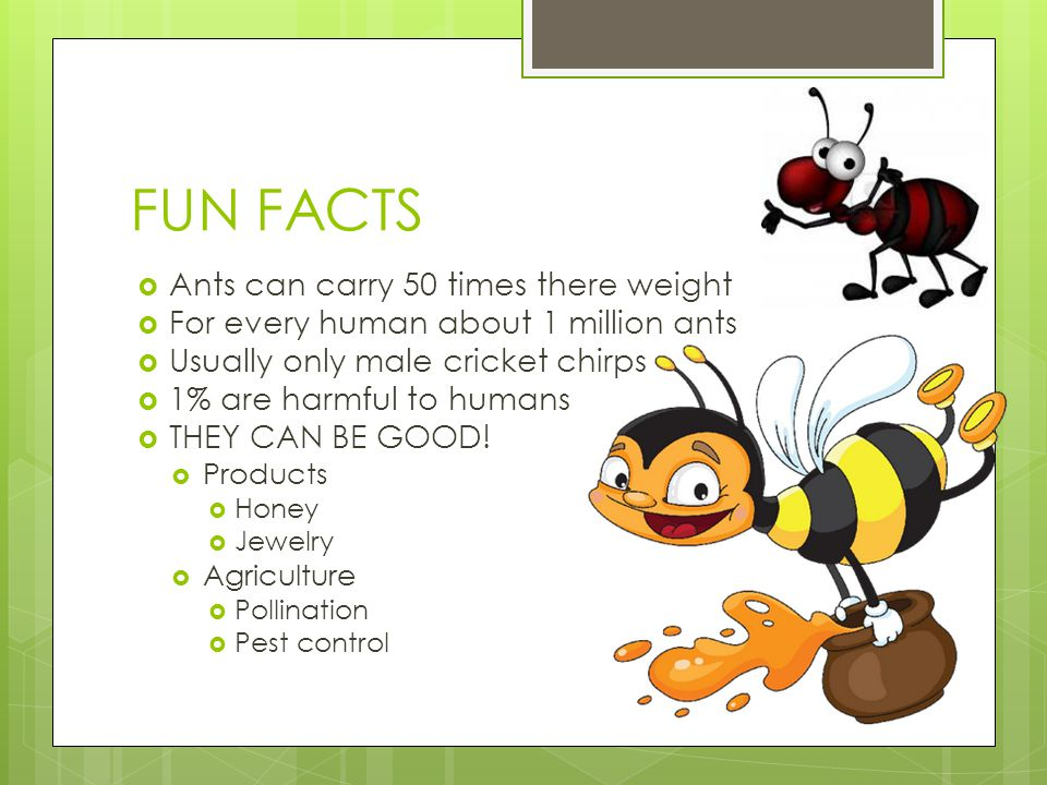 FUN FACTS Ants can carry 50 times there weight