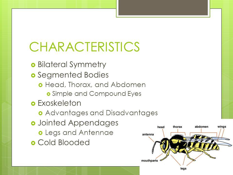 CHARACTERISTICS Bilateral Symmetry Segmented Bodies Exoskeleton