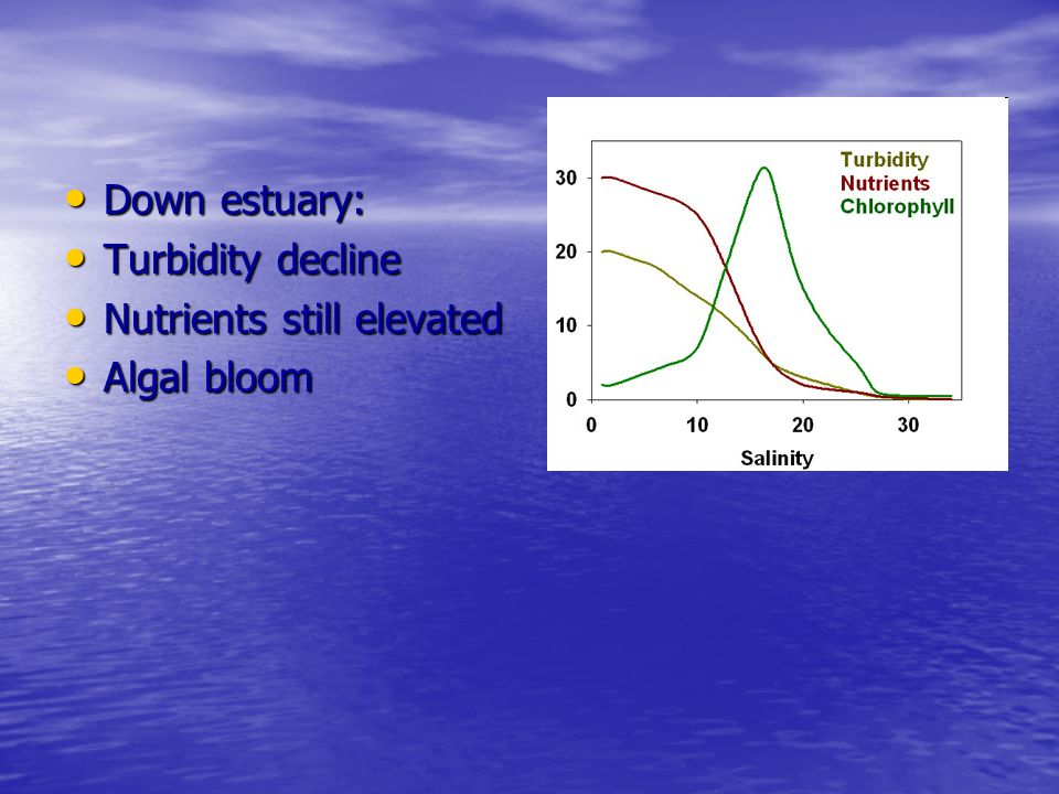 Down estuary: Turbidity decline Nutrients still elevated Algal bloom