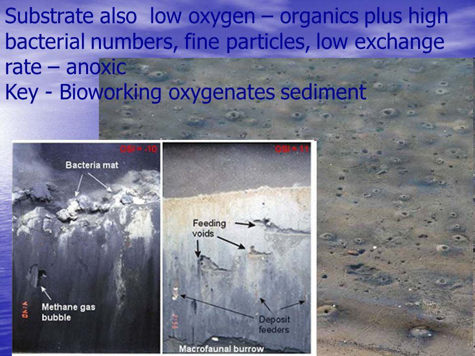 Substrate also low oxygen – organics plus high bacterial numbers, fine particles, low exchange rate – anoxic