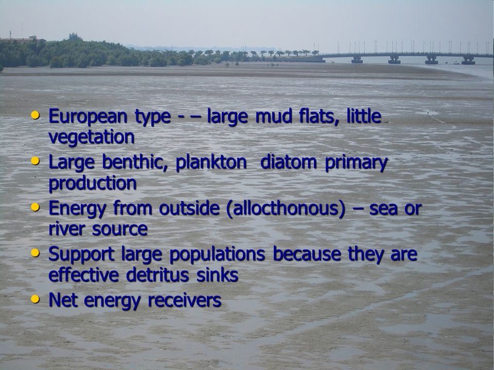European type - – large mud flats, little vegetation