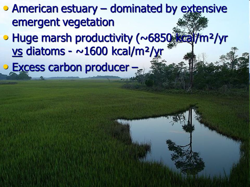 American estuary – dominated by extensive emergent vegetation