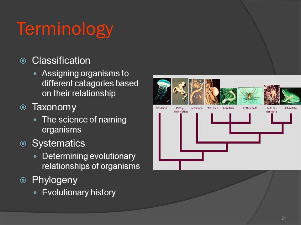 Terminology Classification Taxonomy Systematics Phylogeny