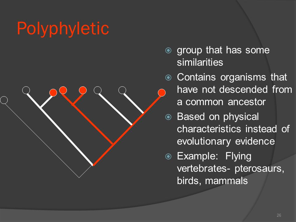 Polyphyletic group that has some similarities