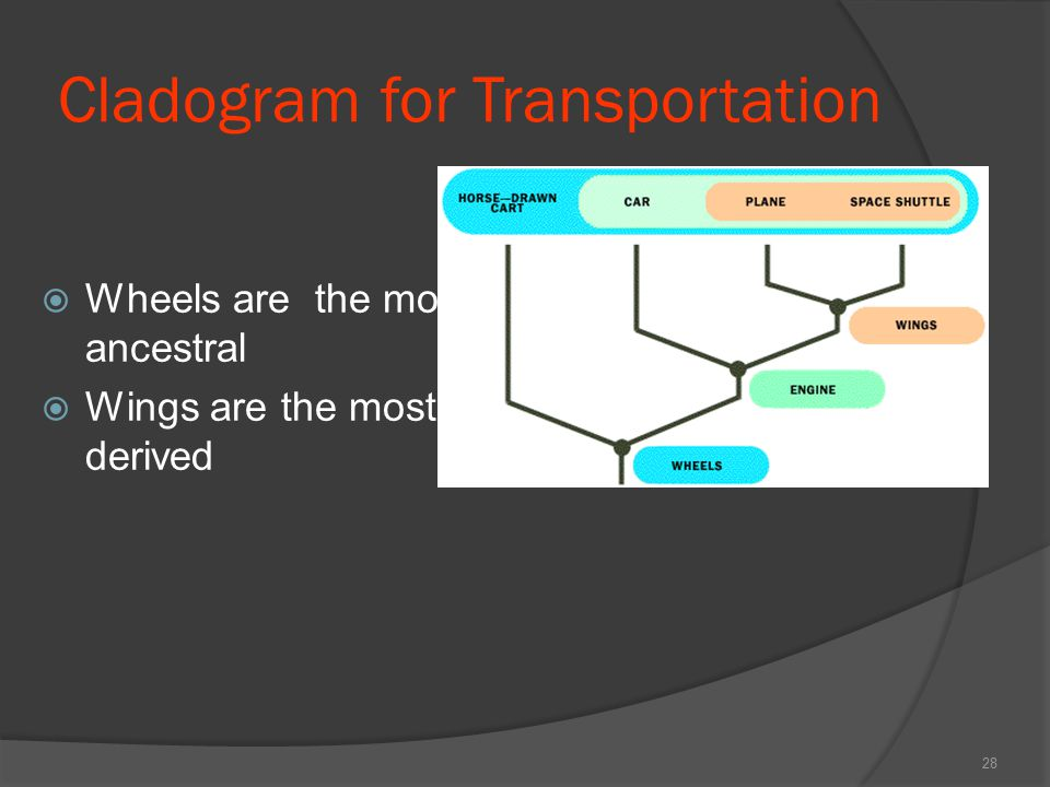 Cladogram for Transportation