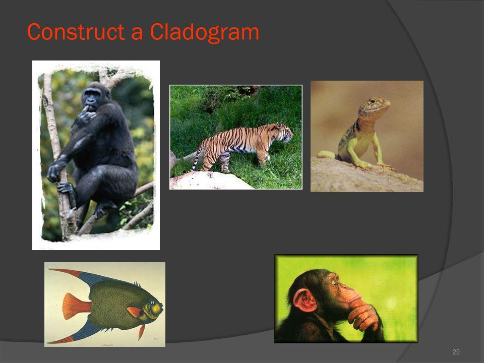 Construct a Cladogram