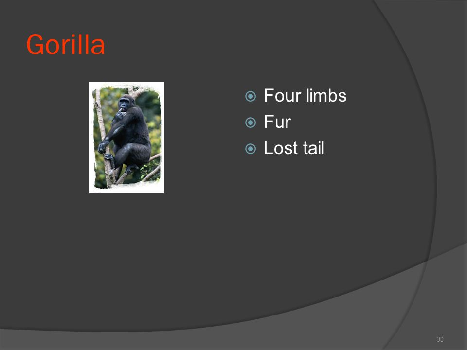 Gorilla Four limbs Fur Lost tail