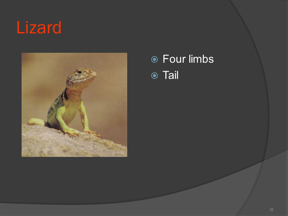 Lizard Four limbs Tail