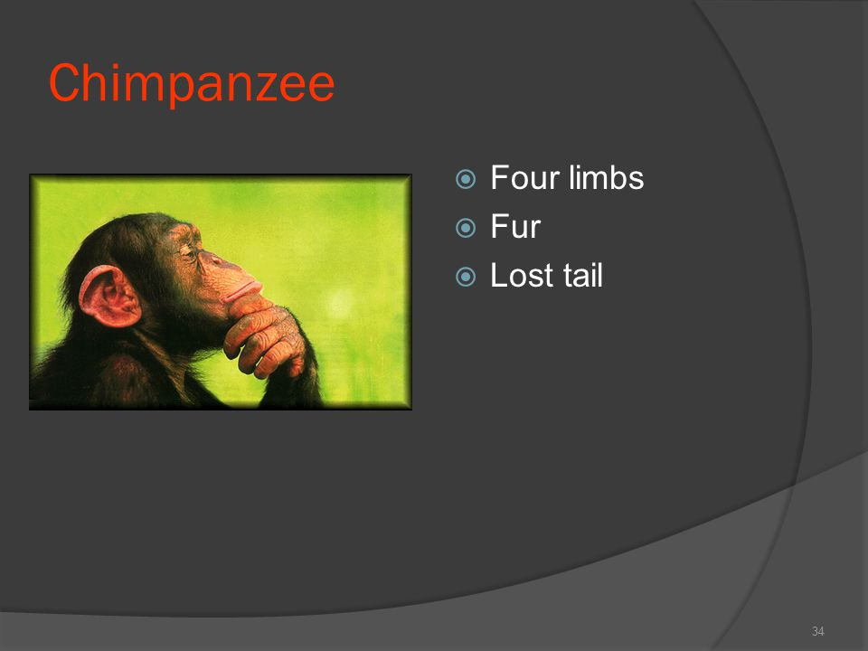 Chimpanzee Four limbs Fur Lost tail