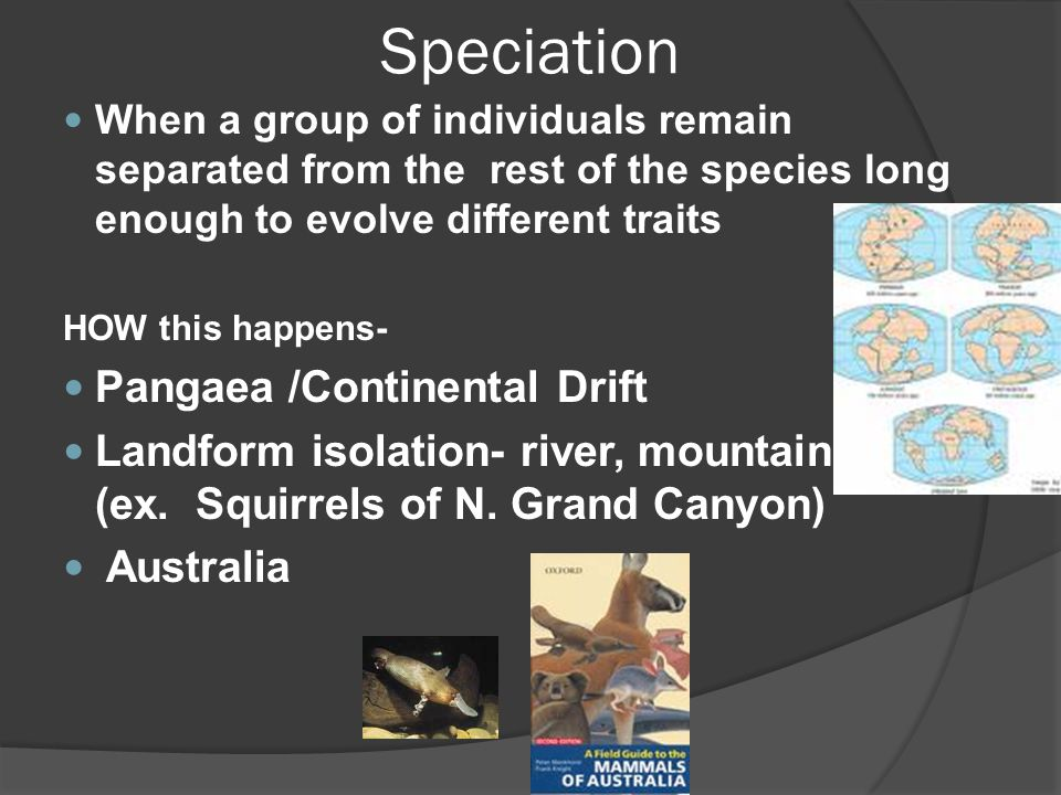 Speciation Pangaea /Continental Drift